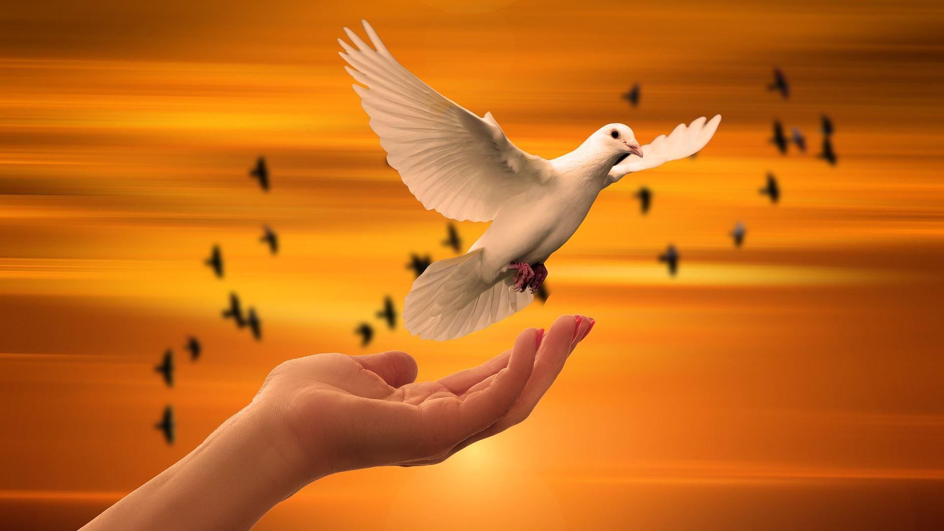 innerlijk vrij - vrijheid - freedom